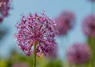 زهرة فى الحديقة الاستوائية فى ميونخ