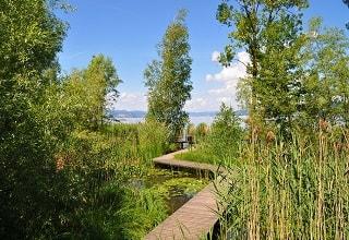 جسر خشبى على شاطىء بحيرة زيورخ