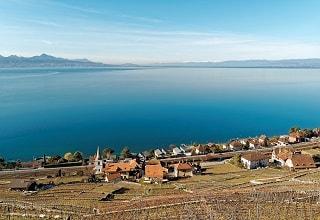 حقول الكروم على شاطىء بحيرة جنيف